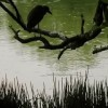 Judy Mullan Bird OUT Of Paradise