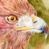 Kristi Arzola Red Hawk E1494541098189