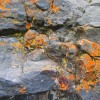 Cindy Medlynn  Lichen On The Rocks Photo On Canvas 16 X 20 Gallery Wrap Finished Edges 260 E1519239130927