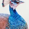 KathrynHansen TheCrown 9.5x7.5 Colored Pencil 900 E1538708849198