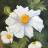 Angela T Phillips Romney Matilija Poppy 12x9 Oil On Canvas 225 E1544302339619